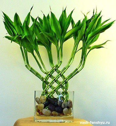 символы семьи бамбук
