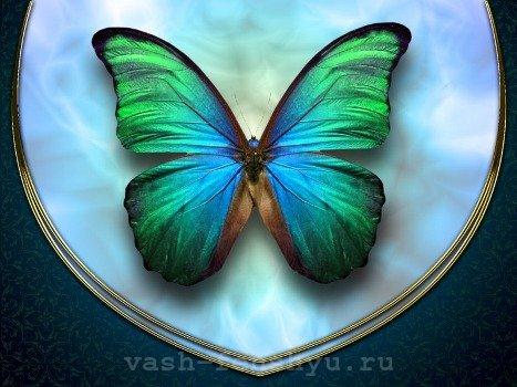 бабочки по фен шуй символ