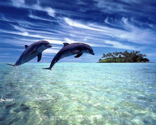 дельфины по фен шуй картина