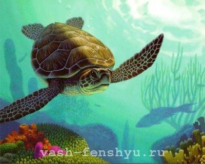 фен шуй зона карьеры черепаха