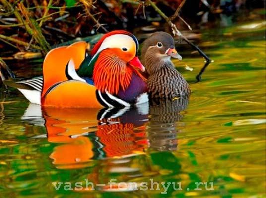 Уточки-мандаринки фен-шуй - талисман любви и верности