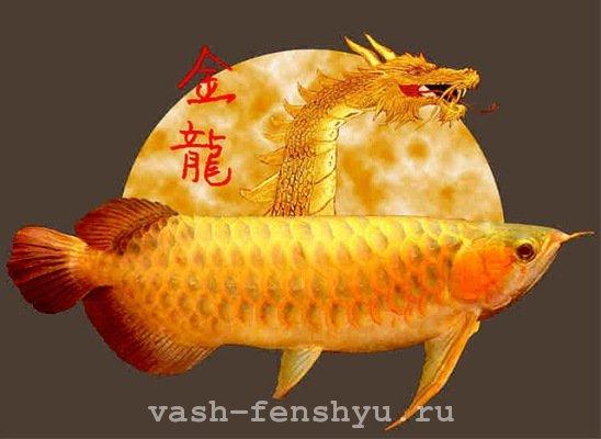 арована рыба дракон