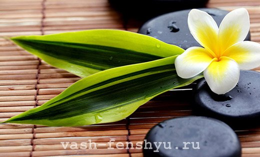 фен шуй плюмерия цветок и камни