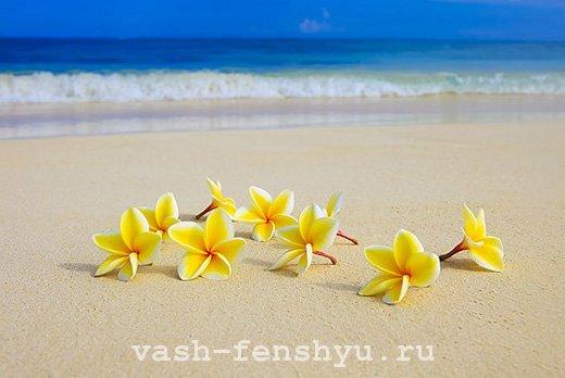 фен шуй плюмерия цветок пляж