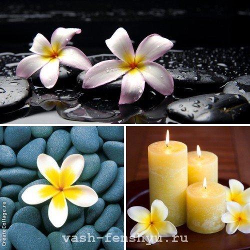 плюмерия цветок ароматерапия фен шуй