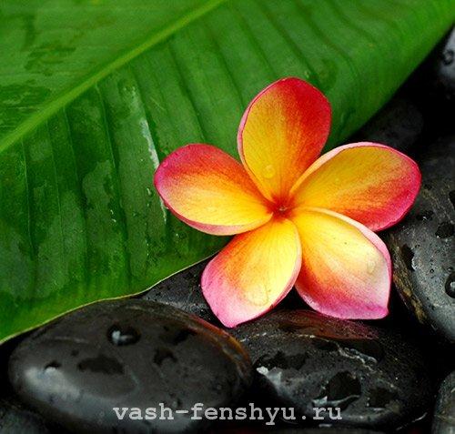 плюмерия цветок фен шуй камни