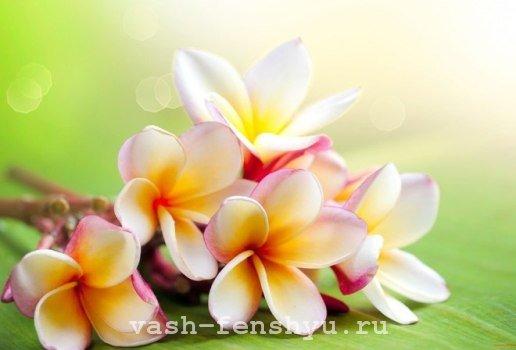 плюмерия цветок фен шуй многоцветный