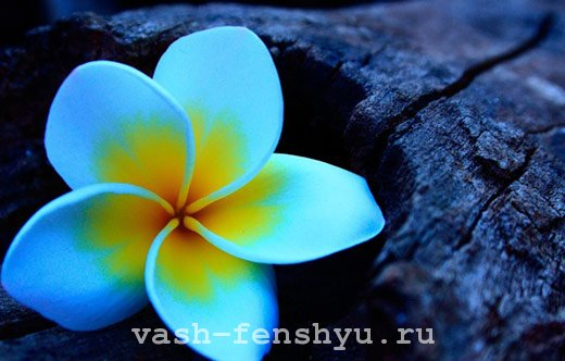 плюмерия цветок и дерево