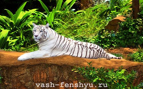 белый тигр что такое фен-шуй