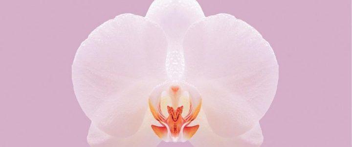 Орхидея по фен-шуй — значение и правила размещения