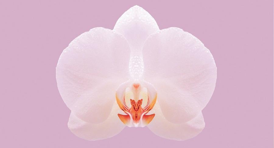 орхидея значение и размещение