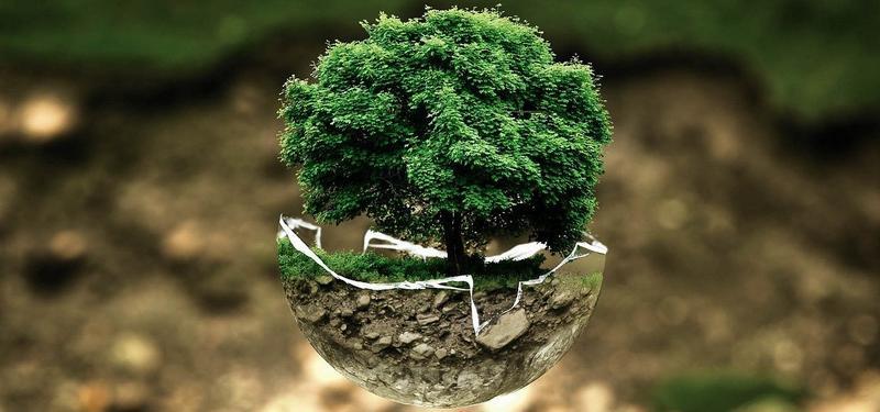стихия дерево